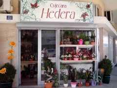 Магазин цветов «Hedera» в Подгорице