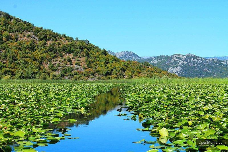 Отдых в Черногории: Прогулки по Скадарскому озеру