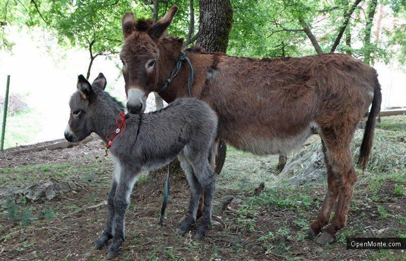Новости Черногории: В Черногории открыли первую ослиную ферму