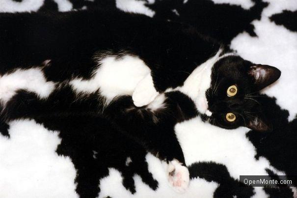 Ovo je interesantno: Это интересно: Коты, способные спрятаться на ровном месте