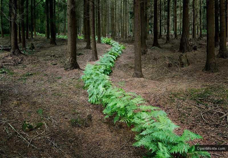 Это интересно: О Черногории: Таинственный и загадочный лес на снимках Элли Дэвис
