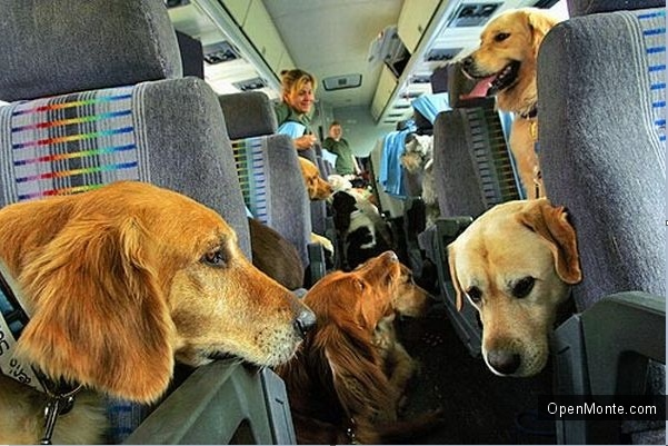 Проживание в Черногории: В Черногорию с собакой